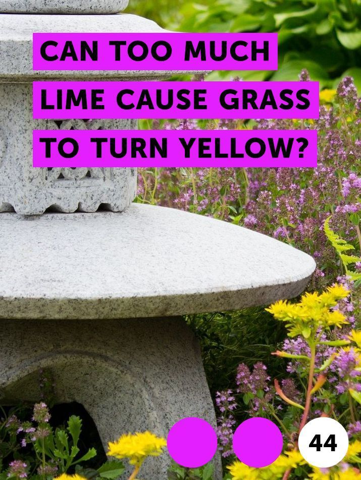 Can Too Much Lime Cause Grass To Turn Yellow Lawn Grasses Often Need The Assistance Of Fertilizer And Other Soil Ame Growing Grass Petunias Strawberry Plants