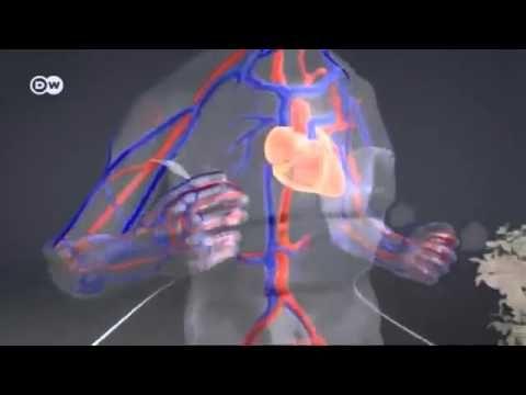 La Importancia de la actividad fisica para la Salud - YouTube