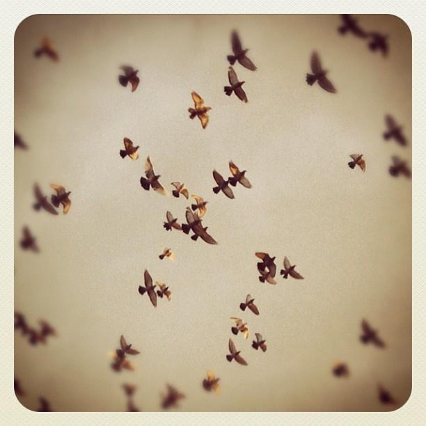 "@mauroparolo's photo: ""#iphone #istantmood #iger #ig #birds"""