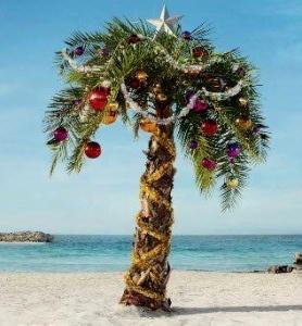 Florida Christmas Tree