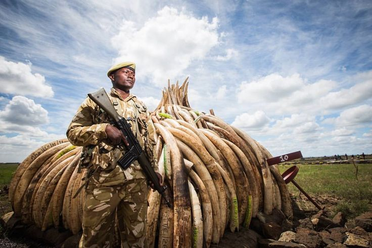 Rhino horn, ivory, lion bone, pangolin scales and more ... this year's CITES summit has brought decisions affecting hundreds of threatened species.