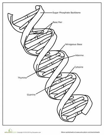 Worksheets: DNA Coloring Page