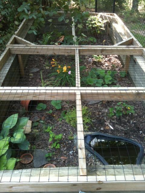 ... Tortoise enclosure, Turtle habitat and Outdoor tortoise enclosure