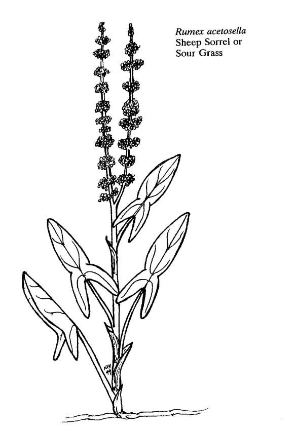 Flowers And Plants Coloring Pages Coloring Pages Color