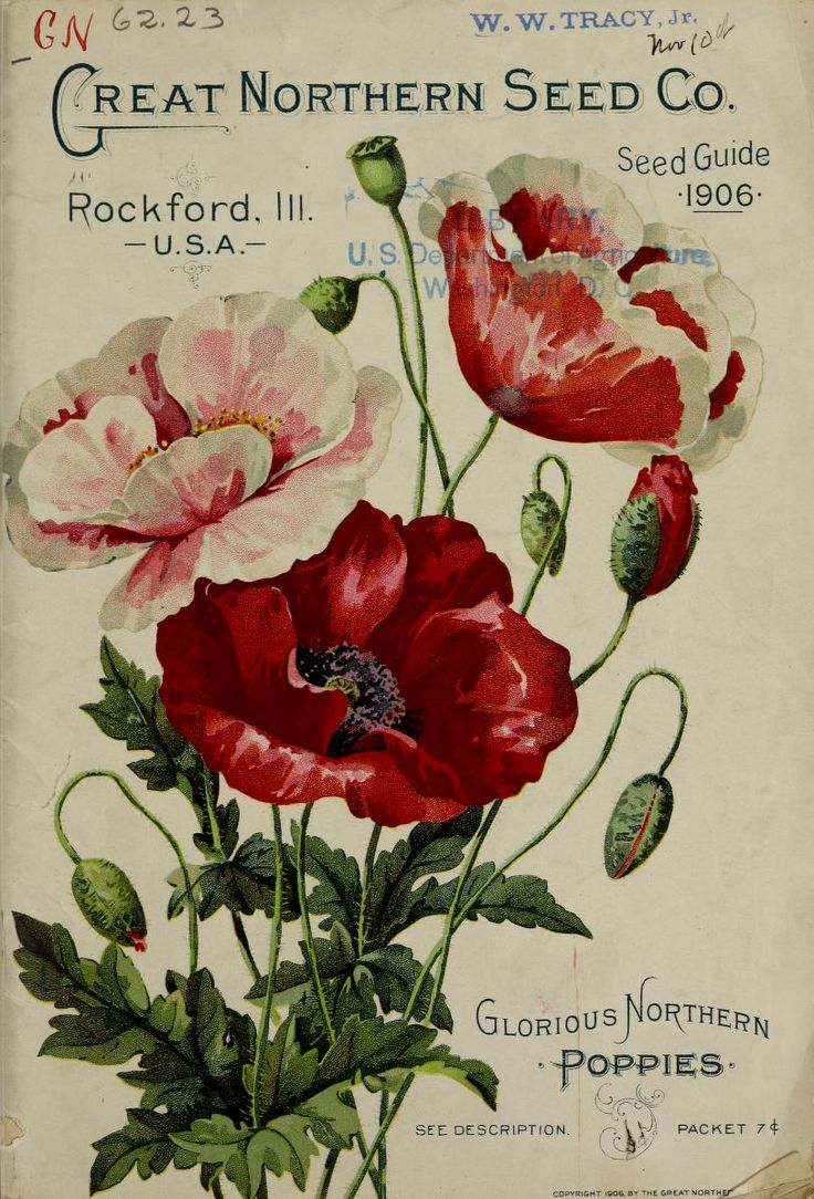 Front cover illustration of 'Glorious Northern Poppies' from 'The Great Northern Seed Company Seed Guide 1906. Rockford, Ill. U.S. Department of Agriculture, National Agricultural Library Biodiversity Heritage Library. archive.org