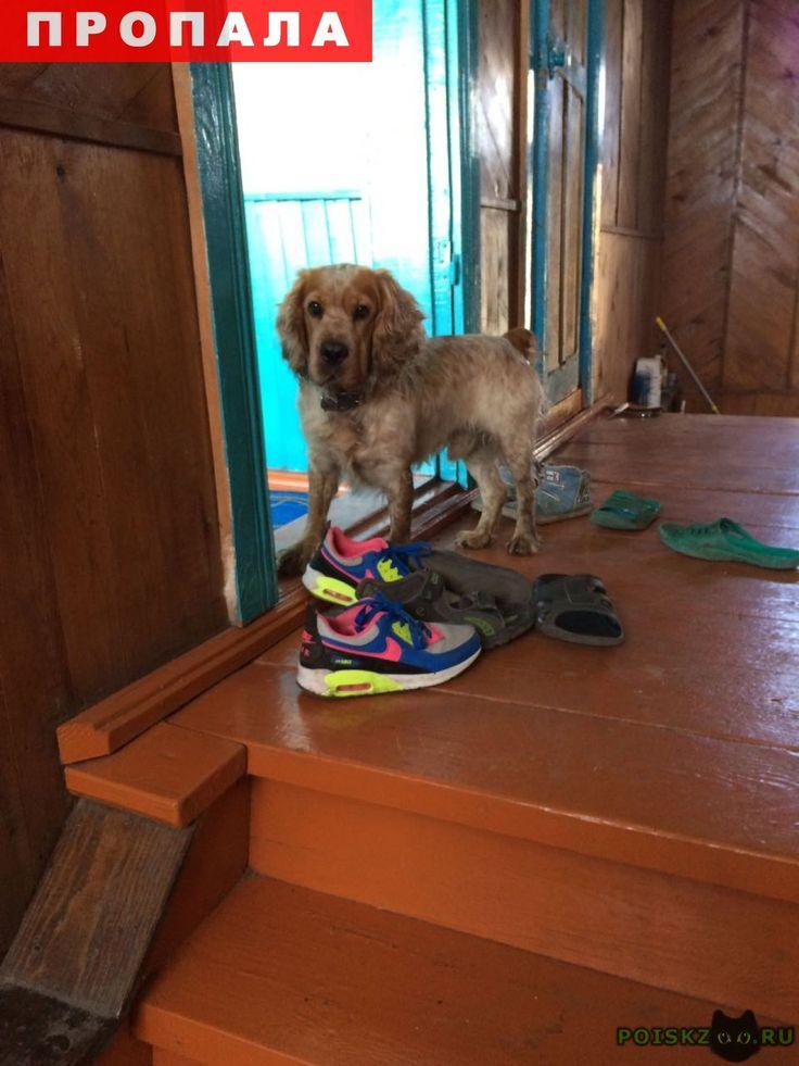 Пропала собака кобель г.Анжеро-Судженск http://poiskzoo.ru/board/read31552.html  POISKZOO.RU/31552 Пропала собака, русский спаниель, рыже-белый окрас, кабель, в районе ..-ей шахты, буду благодарна любой информации.   РЕПОСТ! @POISKZOO2 #POISKZOO.RU #Пропала #собака #Пропала_собака #ПропалаСобака #Анжеро #Судженск #АнжероСудженск #Анжеро_Судженск
