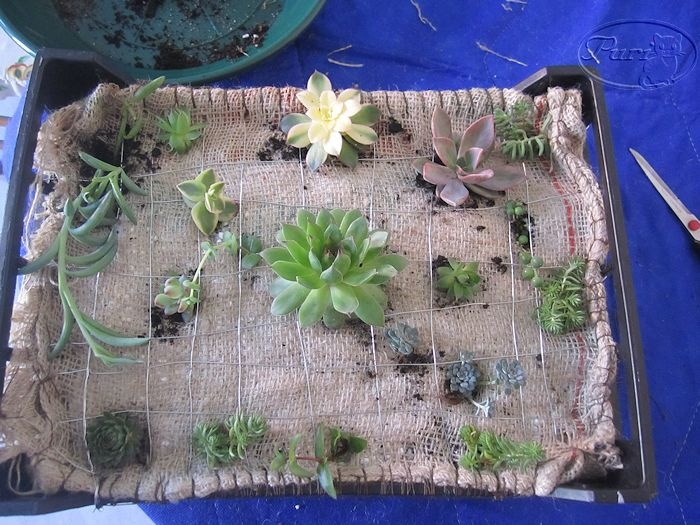 Jardin vertical casero vida con plantas pinterest for Jardin vertical casero palet