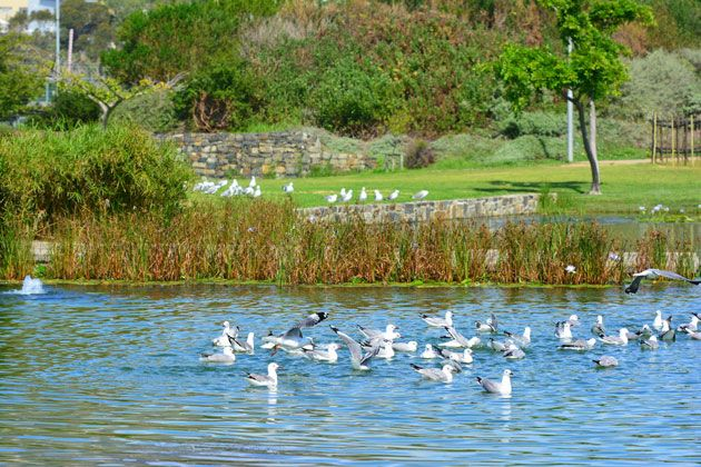 The park is rich in birdlife.