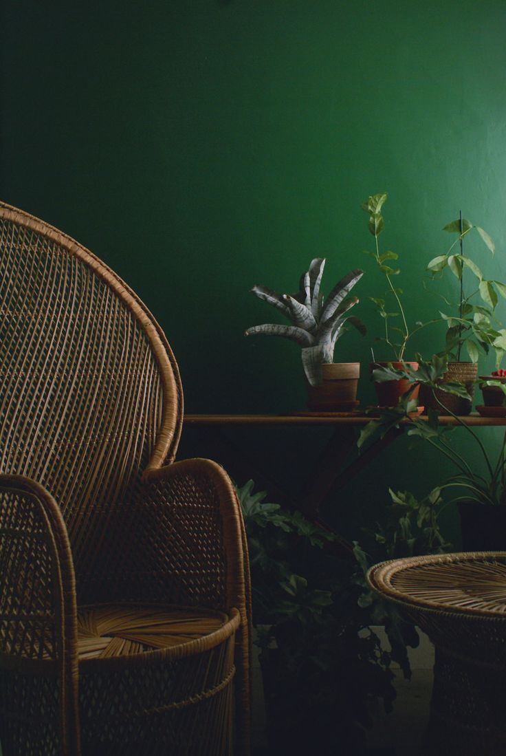Peacock chair green room with plants
