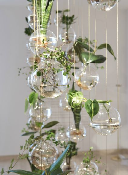 Glass hanging planters: Michael Anastassiades Interesting use of mother-in-law's tongue