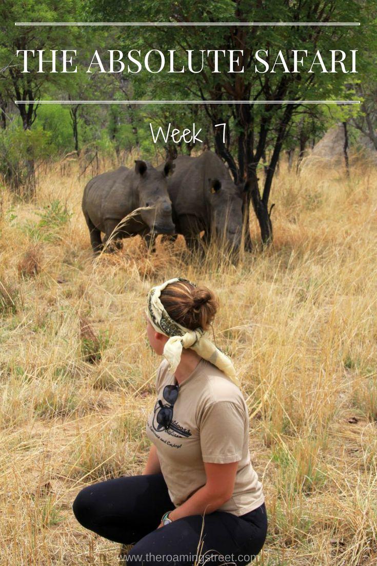The Absolute Safari Week 7: Zimbabwe - The Roaming Street