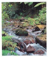Más de 30 ríos importantes y 680 microcuencas aportan más de 10.000 millones de metros cúbicos de agua al año.