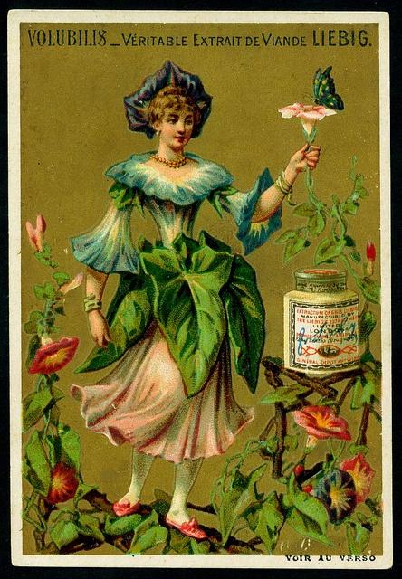 Liebig S217 - Flower Girls 1888 - Volubilis by cigcardpix, via Flickr