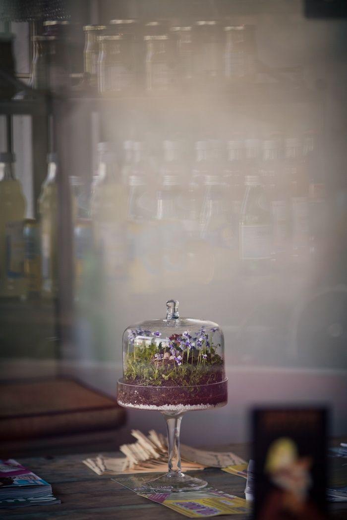 mini flower garden- violets in glass
