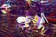 "New artwork for sale! - "" Pelicans Birds Zoo Animals Fowl  by PixBreak Art "" - http://ift.tt/2vuv7J7"