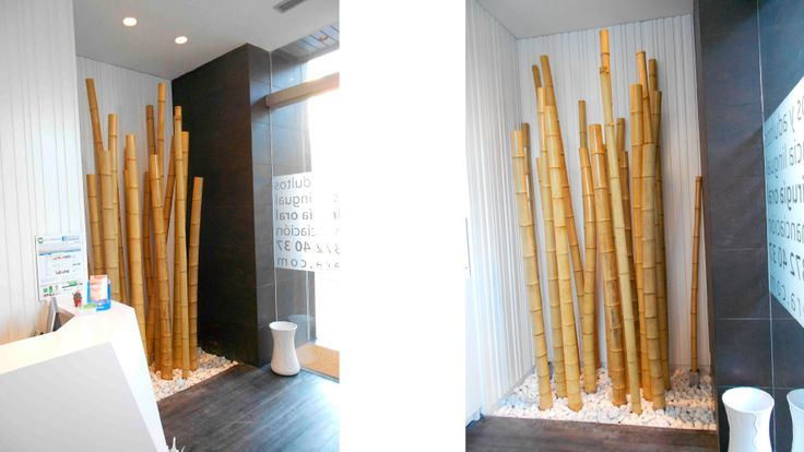 M s de 1000 ideas sobre plantas de bamb en pinterest - Cana bambu decoracion ...