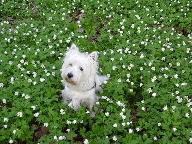 Arttu loves flowers... lähde:pirjoraikkonen