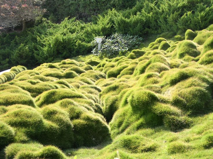 Бахайские сады. Трава