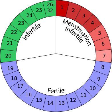 Il metodo di Ogino-Knaus - Periodo Fertile