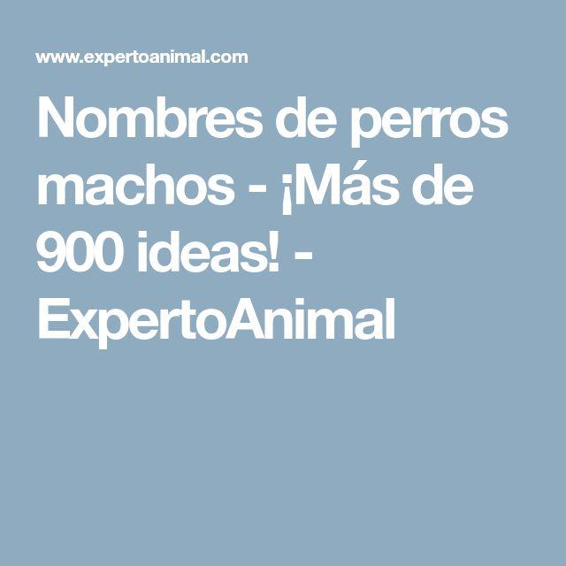 Nombres de perros machos - ¡Más de 900 ideas! - ExpertoAnimal