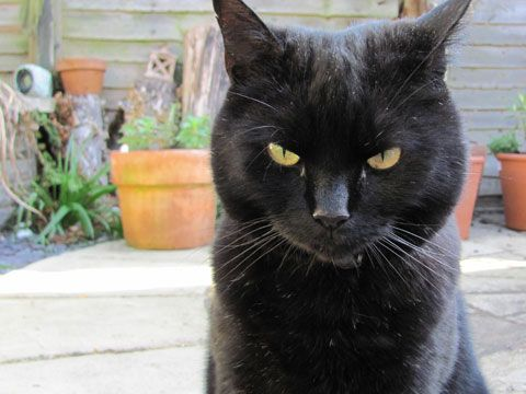 Simon's Real Cats: Hugh - Next is Hugh. If you've seen the ...