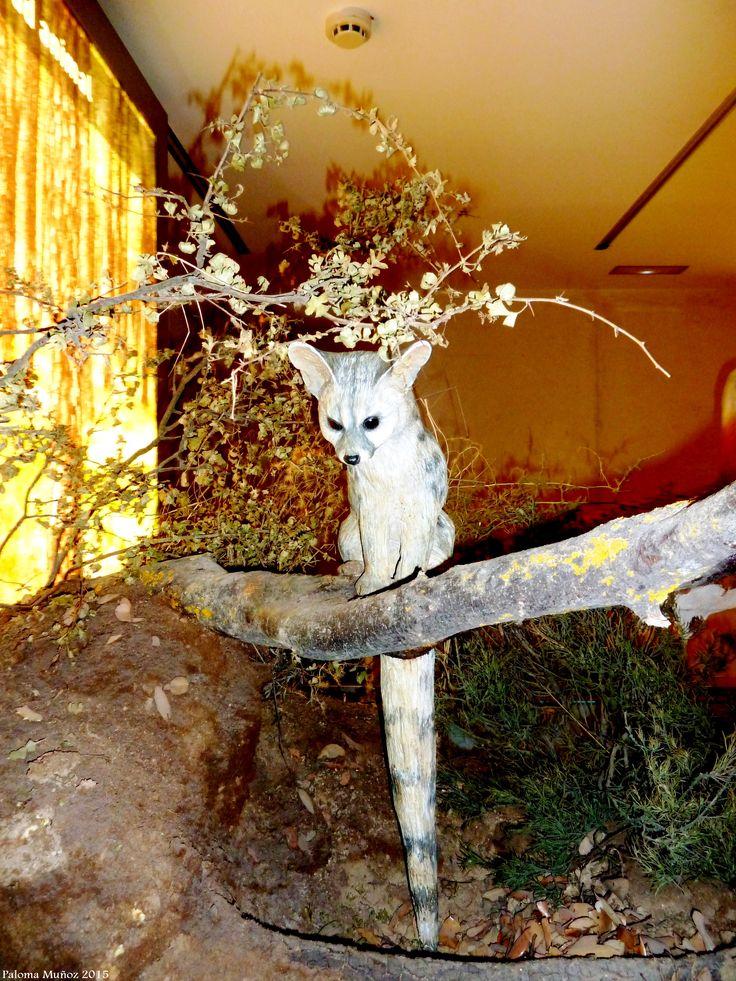 Centro de Interpretación del Castillo de Torija. Animales disecados