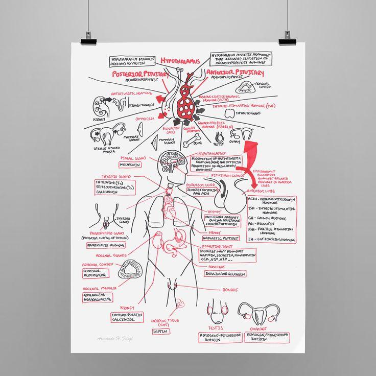 Endocrine Overview from armando hasudungan Nursing