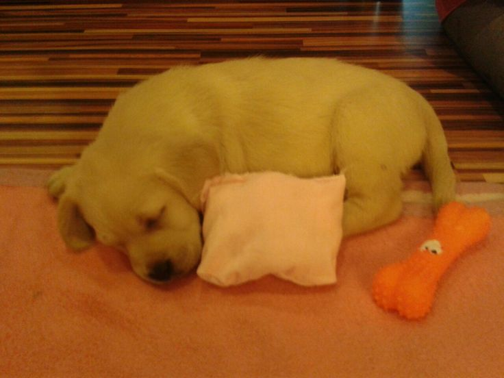 Alvás játék után! Hát nem cuki