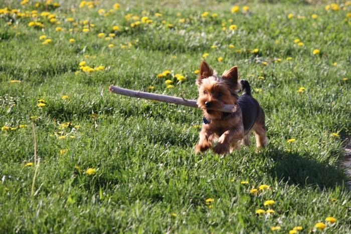 Tips for finding the best dog training schools