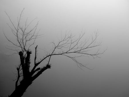 leafless Photo by Ag Adibudojo -- National Geographic Your Shot