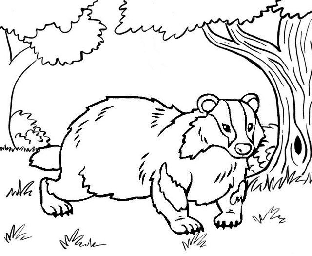 Pin By Cs Pengadaan On Badger Coloring Pages Animal Coloring Pages Coloring Pages Cool Coloring Pages