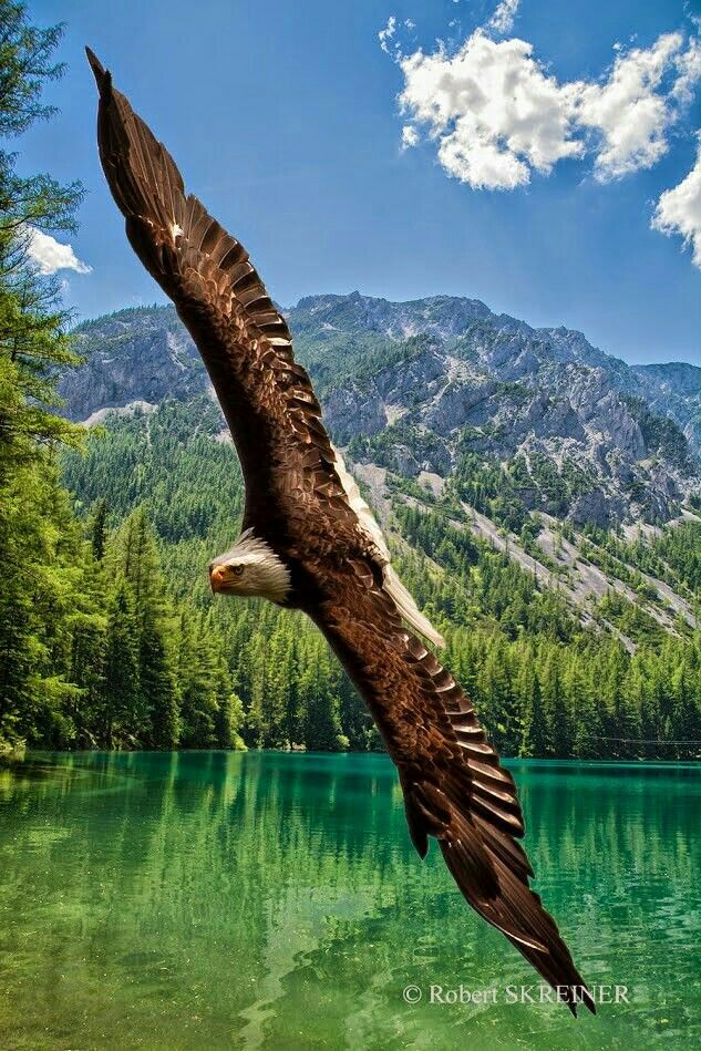 Eagle ........................................................ Please save this pin... ........................................................... Because For Real Estate Investing... Visit Now! http://www.OwnItLand.com