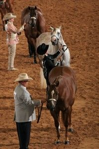 Teach young halter horses to set up in five easy steps.