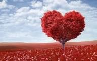 love: about love