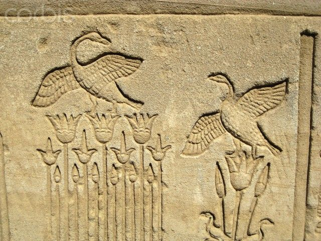 "Carved relief on the outer wall of the structure which houses the ""Hall of the Ennead"" and ""The Sanctuary."" Waterfowl and lotus flowers. Ancient Egyptian, Greco-Roman period, 304 BC - 395 AD. Dendera Temple, Egypt."