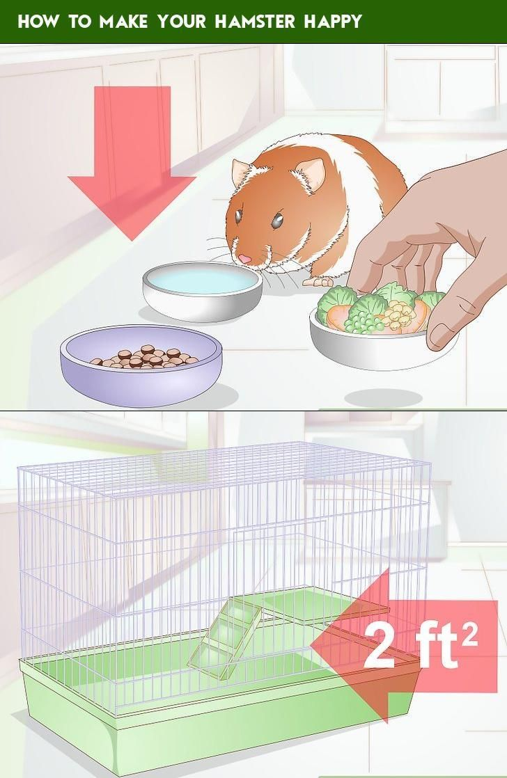 How to Make Your Hamster Happy | English | How to make, Make it