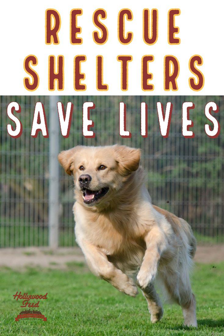 Shelters Save Lives Animal Shelter Socializing Dogs Volunteer