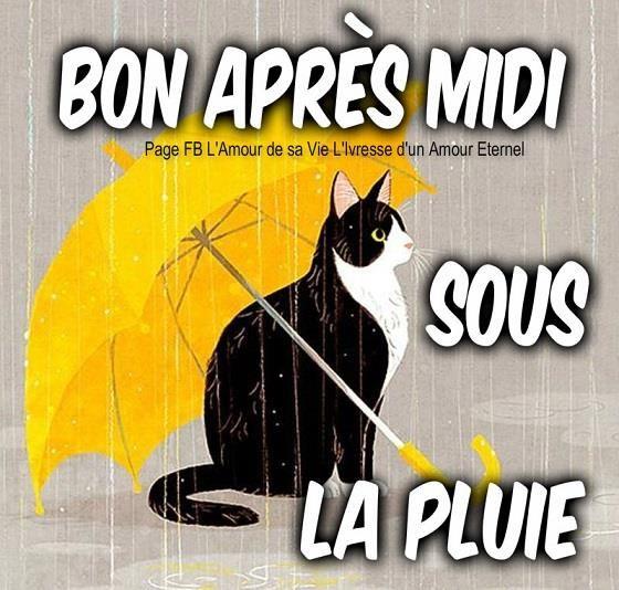 Bon après midi sous la pluie #bonapresmidi pluie parapluie chat
