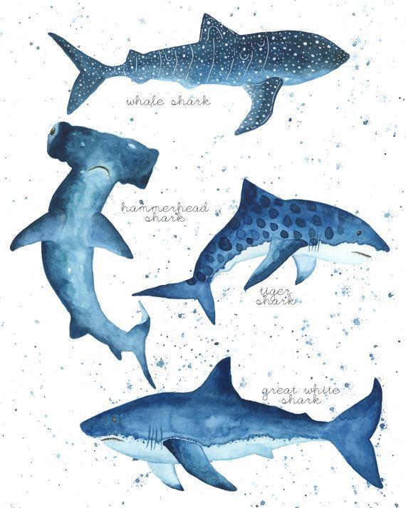 Whale Shark, Great White Shark, Hammerhead Shark, Tiger Shark. ♥ All artwork copyrighted © by Kayla Conyer.