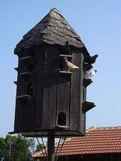 Сизый голубь — Википедия