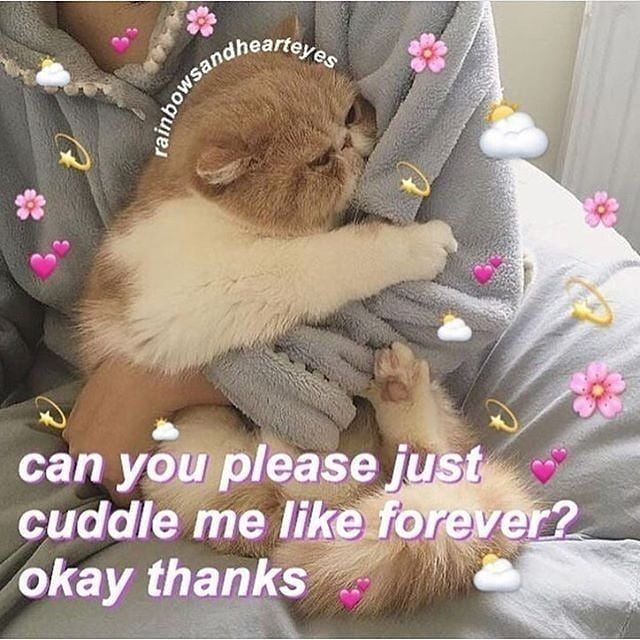 Cute Cats Pretty Cats Cute A Place For Really Cute Pictures And Videos Animals Animal Cats Cat Pet Pet Cute Cat Memes Cute Memes Wholesome Memes