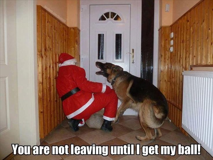 18 Funny Animal Pictures for Today If You'd like, click the link to see more like this: http://dummiesoftheyear.com/18-funny-animal-pictures-for-today/