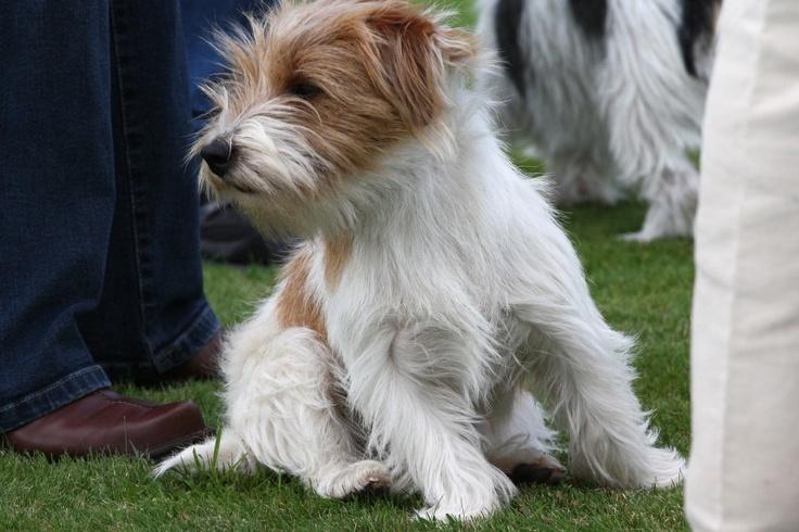 Sporting Lucas Terrier. me guta.