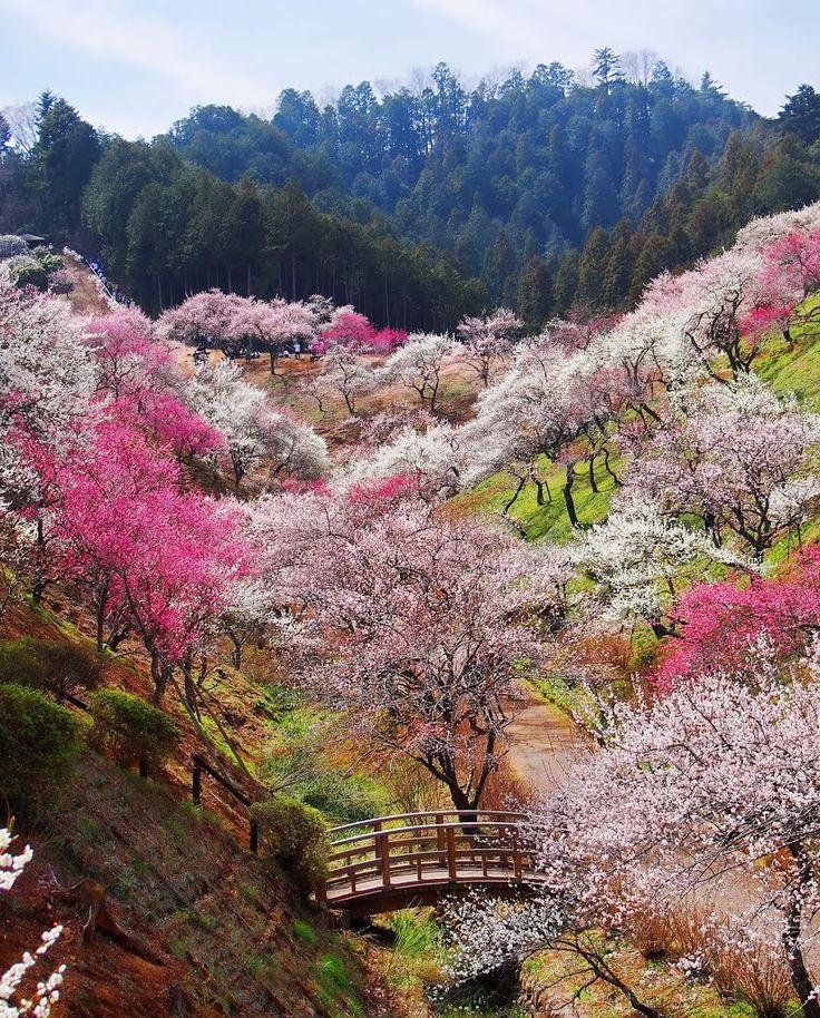 Beautiful gardens at Yoshino-Baigo, Ome / Japan