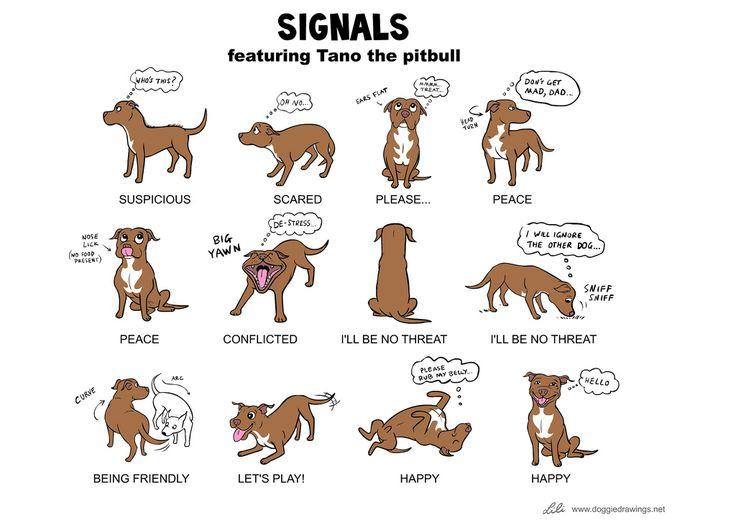 25 best ideas about dog body language on pinterest dog