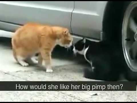 http://www.kattergisbort.no/2012/11/19/topp-10-beste-katt-og-kattunge-videoer/ Topp 10 liste over beste kattevideo på nett! #katter #video #film #katt #pusekatt #dyr #husdyr #krangle #søt #kattemor #mor #sint #gal #morsom