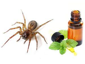 17 Best Images About War On Pest On Pinterest Plants