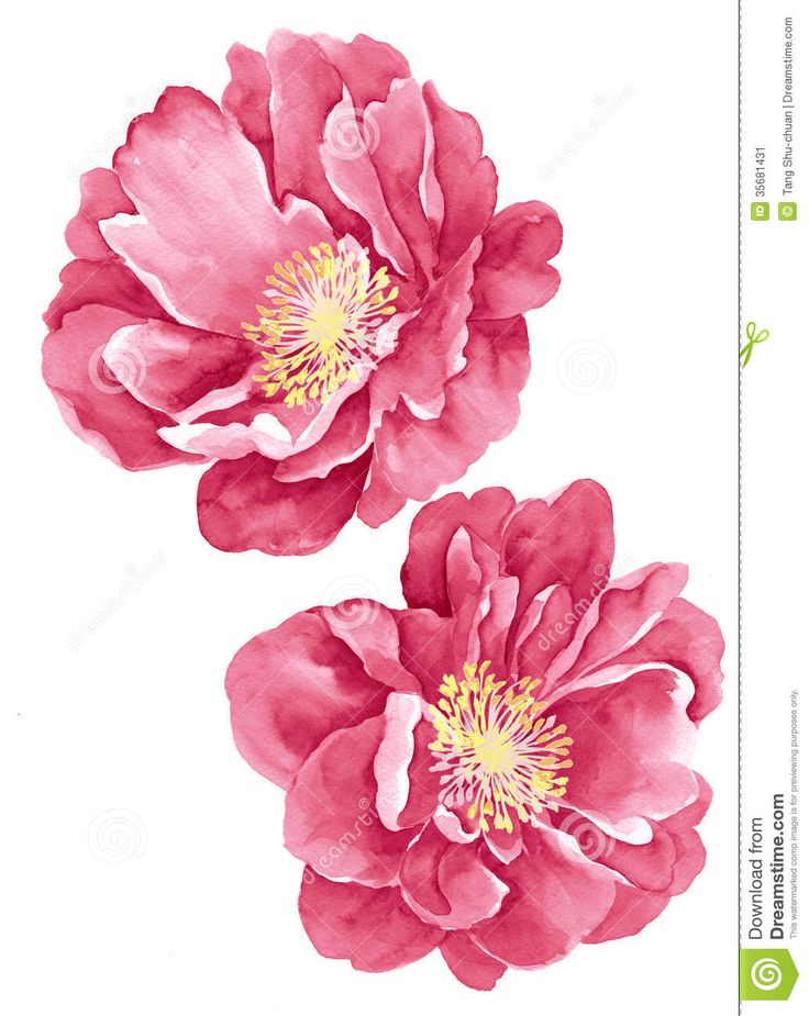 289 best paintings botanicals images on pinterest daisies daisy photo about watercolor illustration flowers in simple background 35681431 mightylinksfo
