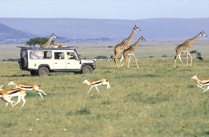 Masai Mara.  For bookings contact:  Mr. Ben Owino, Adventure specialist, SPLENDOURS OF AFRICA TOURS & TRAVEL, P.O.Box 13906,-00100-GPO Nairobi,Kenya Tel.+254 724 978 975 /+254 711 444 295,  Uganda House,1st Floor-Kenyatta Avenue. E-MAIL: info@splendoursofafricatours.com WEBSITE: www.splendoursofafricatours.com