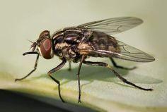 Cómo ahuyentar de tu casa definitivamente a las moscas en Noticias24